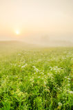 névoa grossa da manhã na floresta do verão Imagem de Stock