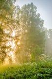 névoa grossa da manhã na floresta do verão Imagem de Stock Royalty Free