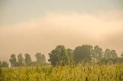 névoa grossa da manhã na floresta do verão Fotos de Stock