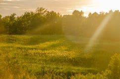 névoa grossa da manhã na floresta do verão Imagens de Stock Royalty Free