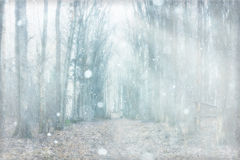 Névoa místico da floresta fotografia de stock