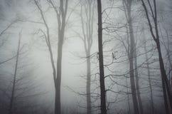 Névoa misteriosa nas árvores no outono atrasado Imagens de Stock Royalty Free