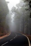 Névoa na estrada em uma floresta do pinho Foto de Stock Royalty Free