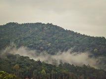 Névoa na floresta úmida fotografia de stock
