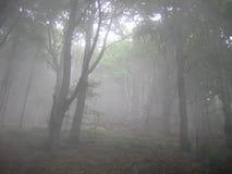 Névoa na floresta fotografia de stock royalty free