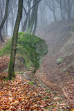 Névoa na floresta Foto de Stock Royalty Free