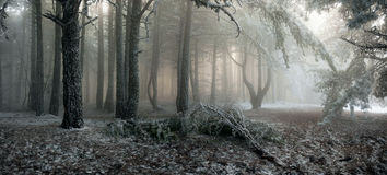 Névoa na floresta fotos de stock royalty free