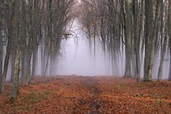 Névoa na floresta 3 foto de stock
