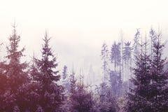 Névoa na floresta Fotografia de Stock