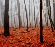 Névoa na floresta Fotos de Stock