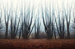 Névoa na floresta assombrada Imagens de Stock Royalty Free