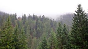 Névoa na floresta do mistério filme