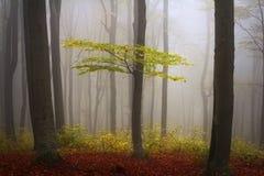 Névoa na floresta durante o outono Imagens de Stock