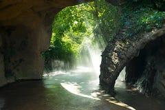 Névoa na floresta na luz solar Fotografia de Stock Royalty Free
