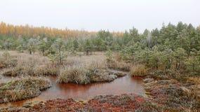 Névoa na fuga do pântano do inverno com lagoa do enxofre imagens de stock royalty free