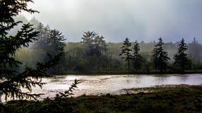 Névoa nas árvores em um pantanal litoral imagens de stock