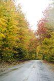 Névoa nas árvores na estrada traseira Foto de Stock