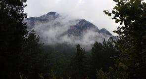 Névoa nas florestas da montanha foto de stock