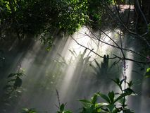 Névoa nevoenta em uma floresta /Rainforest/Woods Imagens de Stock