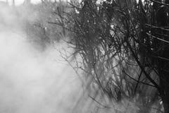 Névoa no fundo preto e branco da floresta imagem de stock royalty free