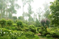 Névoa no parque chettiar do monte do kodaikanal fotografia de stock