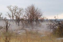 Névoa no parque de Kruger fotografia de stock royalty free