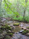 Névoa no rio de Ocanaluftee Fotografia de Stock