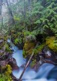 A névoa pendura nas árvores acima de Moss Covered Avalanche Creek fotografia de stock royalty free