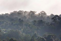 Névoa que aumenta na manhã sobre a floresta, árvores, como o país das maravilhas Imagens de Stock Royalty Free