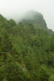 Névoa sobre a floresta Foto de Stock Royalty Free
