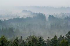 Névoa sobre a floresta Fotos de Stock Royalty Free