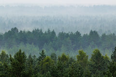 Névoa sobre a floresta Fotografia de Stock Royalty Free