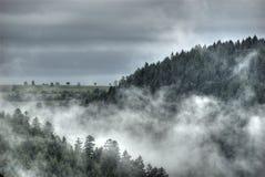 Névoa sobre a floresta preta Fotos de Stock Royalty Free