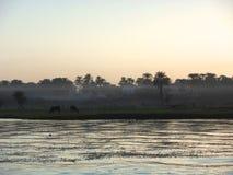 Névoa sobre o Nilo do rio Fotografia de Stock Royalty Free