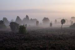 Névoa sobre a paisagem de florescência bonita da charneca no nascer do sol fotos de stock royalty free
