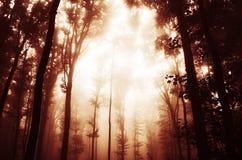 Névoa vermelha na floresta assombrada Fotos de Stock Royalty Free