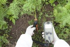 Níveis de radiação de medição de cenoura fotos de stock