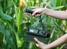 Níveis de radiação de medição de milho Fotografia de Stock Royalty Free