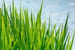 Nível da grama da água e de água fotos de stock
