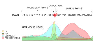 nível de hormona ilustração royalty free