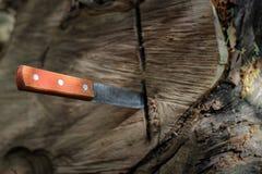 Nóż z drewnianą rękojeścią, zablokowaną w kawałku bagażnik zdjęcie royalty free