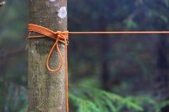 Nó alaranjado da corda na árvore Foto de Stock