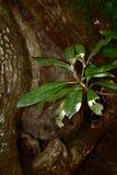 Nó da árvore Imagens de Stock