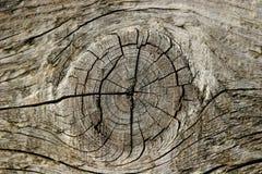 Nó da madeira de pinho Imagens de Stock Royalty Free