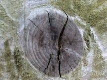 Nó de madeira Imagens de Stock