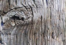 Nó de madeira resistido do borne da cerca Fotos de Stock