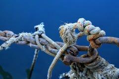 Nó marinho Fotografia de Stock