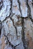 Nó na casca de árvore velha Fundo de madeira da estrutura da pele fotografia de stock