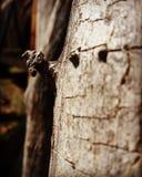 Nó na madeira fotografia de stock