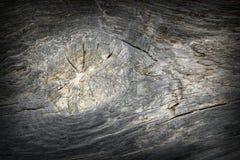 Nó na madeira de carvalho Foto de Stock